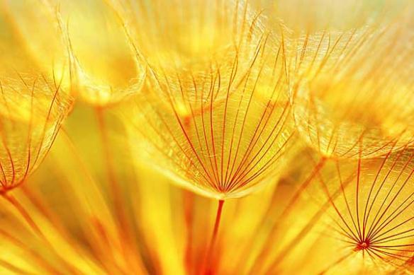 bain de soleil fleur jaune