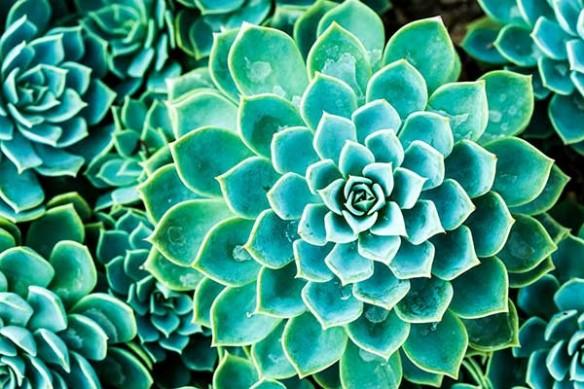 décoration cuisine Cactus mural original