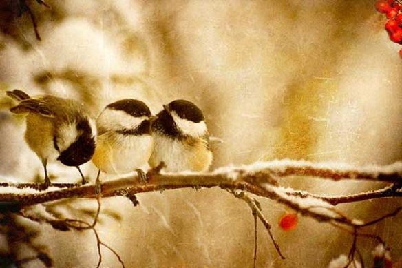moinneaux sur une branche en hiver