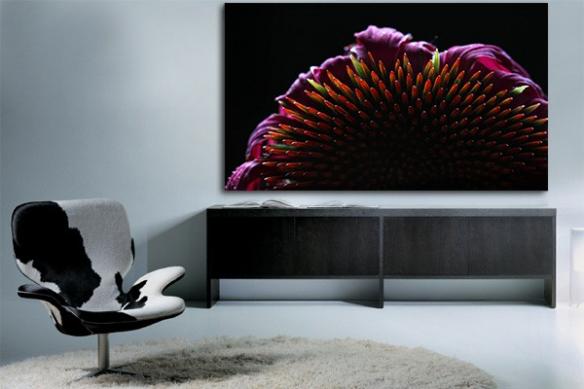 Tableau fleur Echinacea