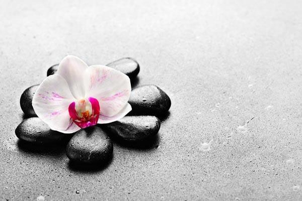 tableau fleur orchid e galet izoa. Black Bedroom Furniture Sets. Home Design Ideas