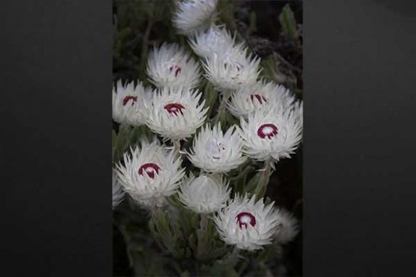 Flower illusion fleur blanche tableau décoration intérieur
