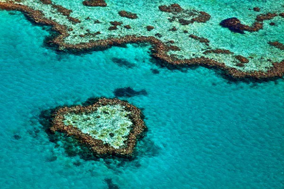 corail fome de Coeur