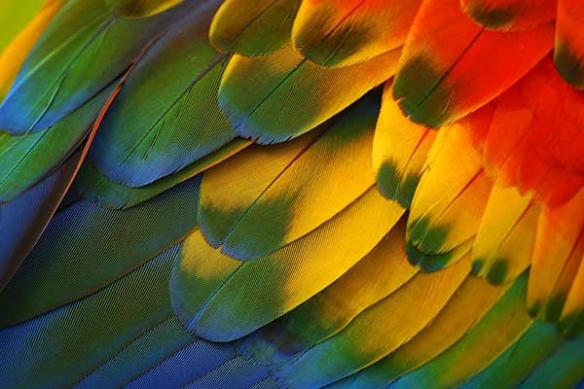 plumes aras perroquet toile originale