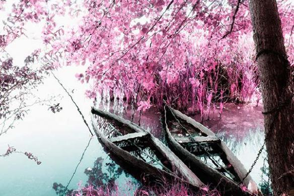 décoration toile rive de cerisiers