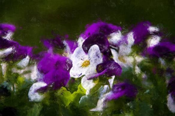 Papier peint decor fleurie