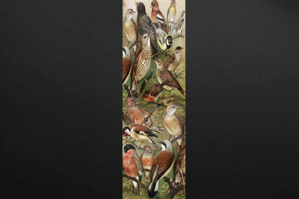 Papier peint mural Ornithologie