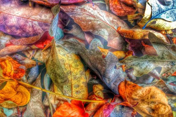 parterre de feuilles morte