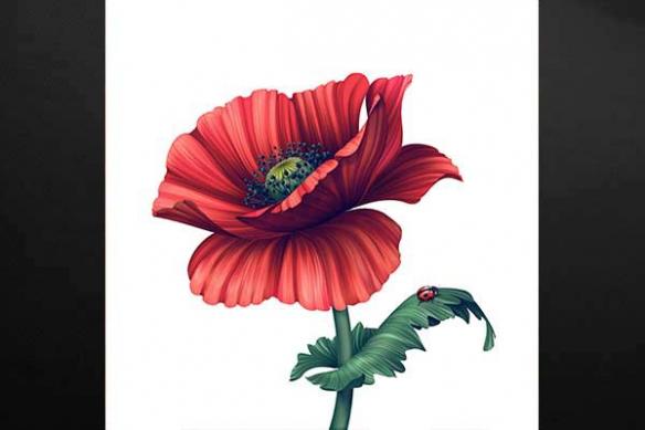 coquelicot aquarelle tableau fleur coccinelle