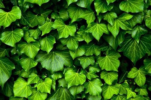 mur végétal trompe oeil déco Mise au vert