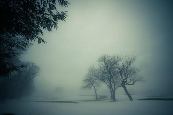 Forêt hiver brouillard neige papier peint photo