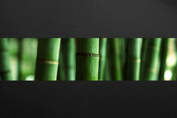 Papier peint zen Bambous Verts