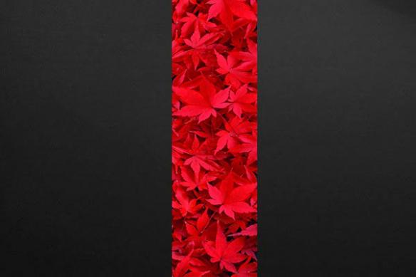 Papier peint feuille rouge