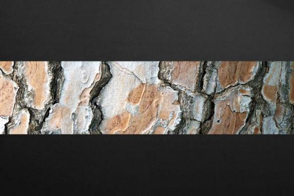 Papier peint deco ecorce arbre