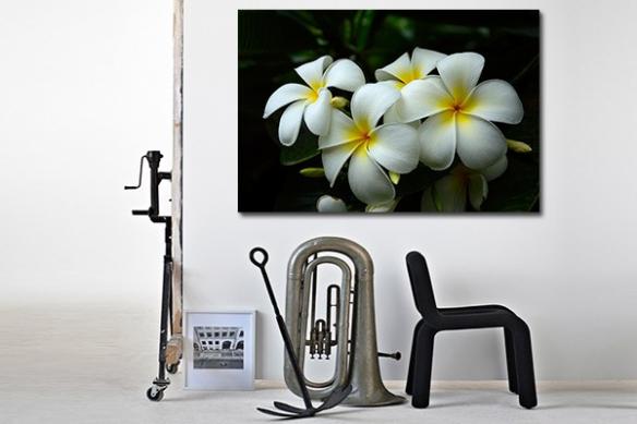 Tableau déco Fleur Blanche