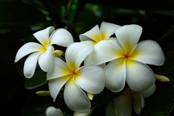 Papier peint déco Fleur Blanche