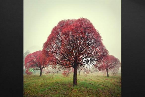 Toile Déco murale feuillage d'automne