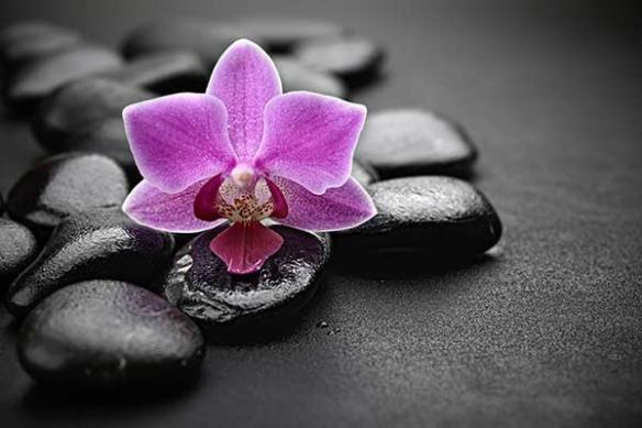 Tableau zen fleur violet