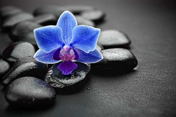 Toile fleur bleu