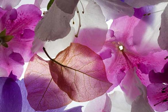 Papier peint décoration mur fleur violette