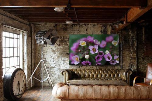Tableau fleur Viola