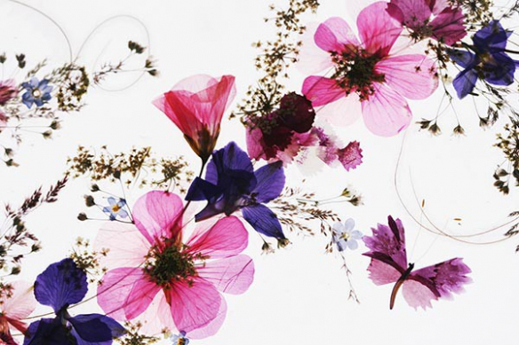Toile Fleurs séchées