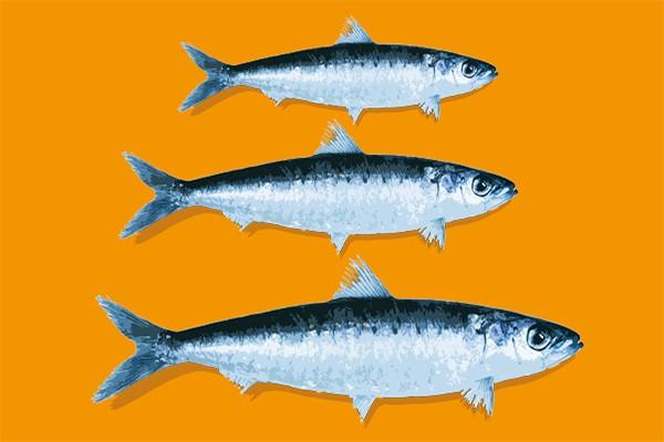 Tableau deco poisson d coration cuisine moderne - Tableau de cuisine moderne ...