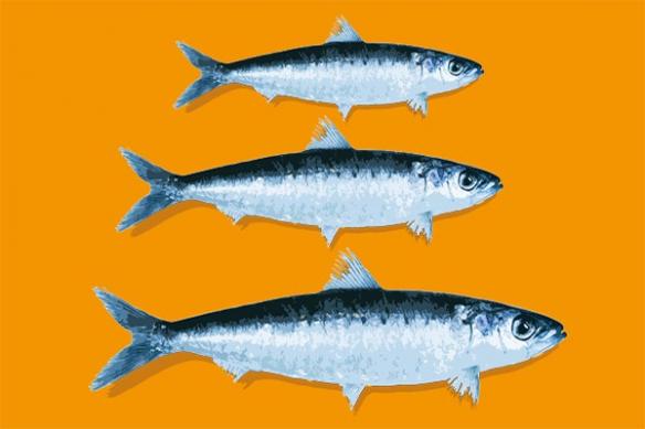 Tableau pour cuisine moderne deco sardines