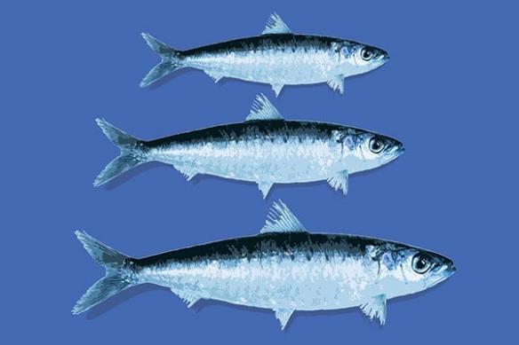 Tableau design déco poisson