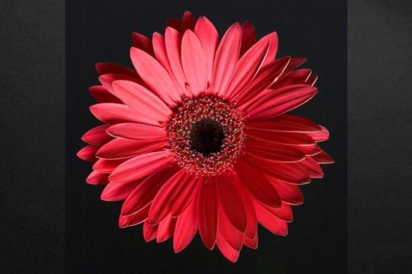 Tableau déco zen fleur soleil
