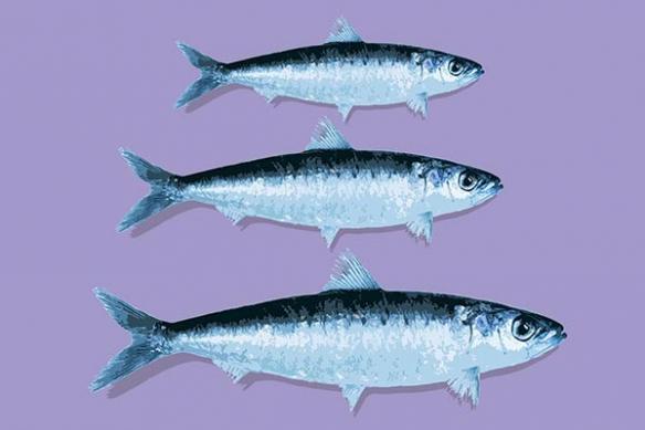 Tableau cuisine design poisson