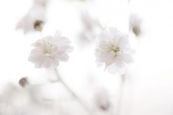 Toile fleur Pureté