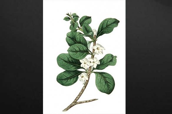 Toile décoration Fleur Dessinée