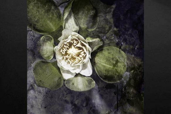 Toile déco fleur aquatique