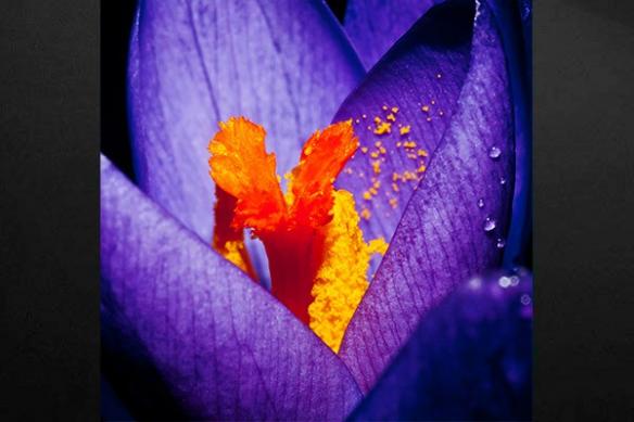 toile imprimée fleur poussière d'or