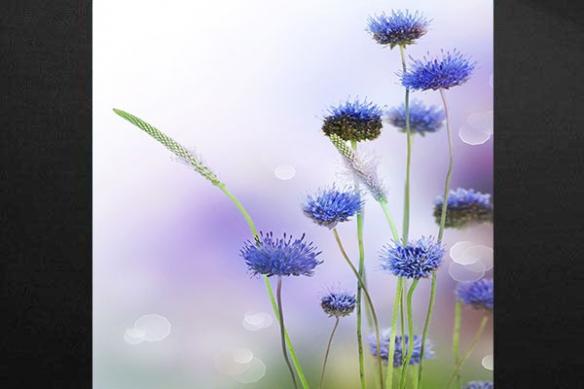 Tableau deco fleur fraicheur violine