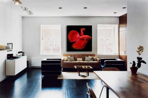 Tableau Design Poisson Rouge Combattant