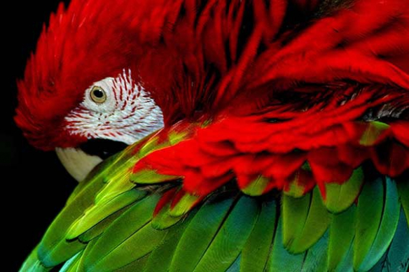 Tableau déco regard du perroquet