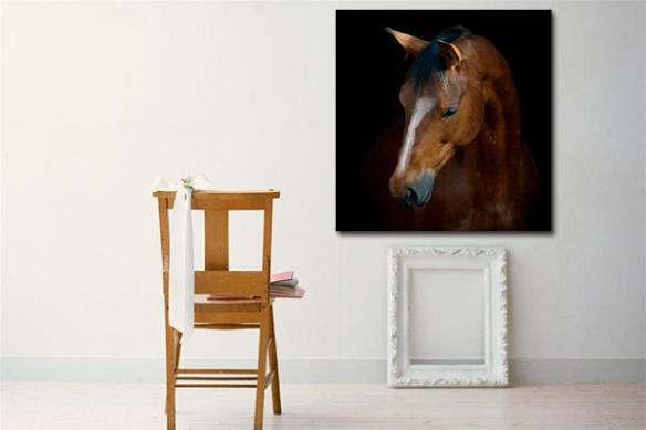 Tableau photo amour du cheval