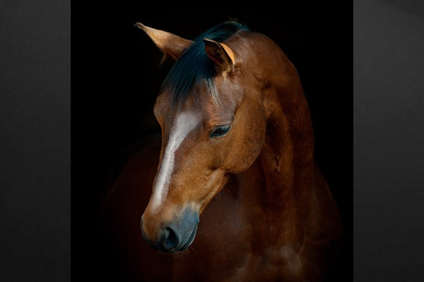 photo cheval tableau