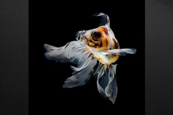 Tableau déco poisson téléscope