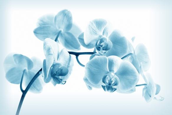 Toile zen Orchidée translucide