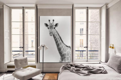 tableau moderne girafe noir et blanc izoa. Black Bedroom Furniture Sets. Home Design Ideas
