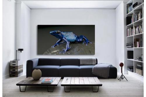 Tableau mural Grenouille Bleue