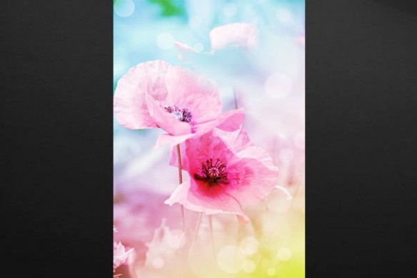 Tableau fleur Univers Romantique