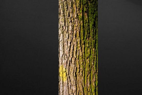 décoration murale nature effet Ecorce arbre
