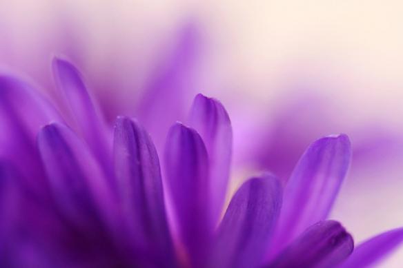 Papier Peint photo chambre Fleurs violettes