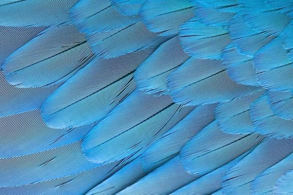 Toile imprimée déco moderne Plumes bleues