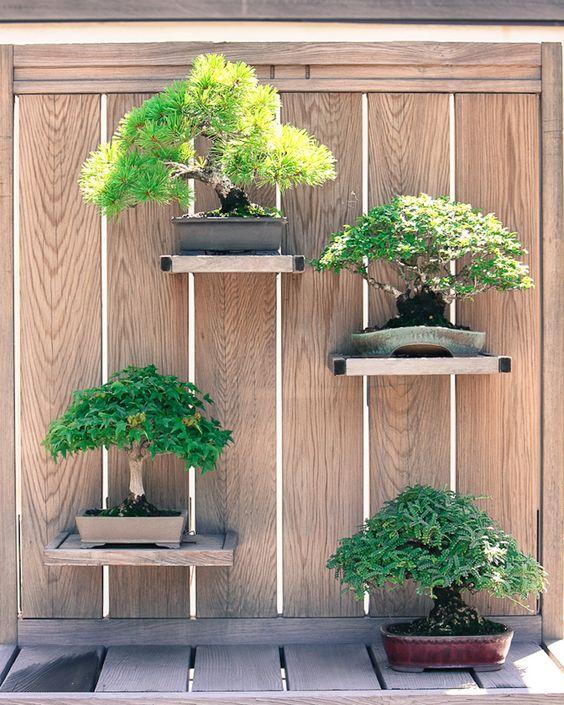 déco japonaise : bonsai