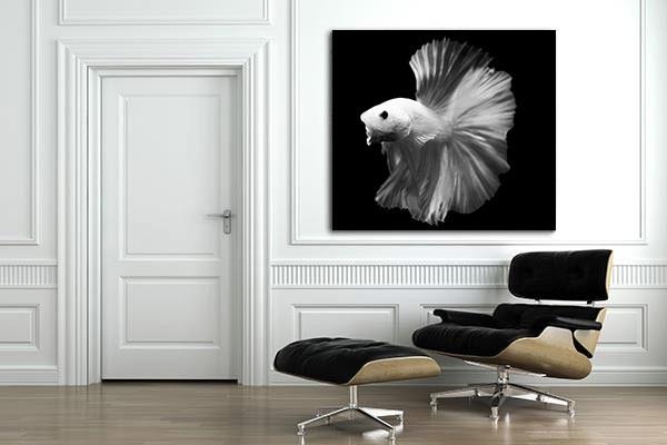 Toile design photo poisson combattant noir et blanc